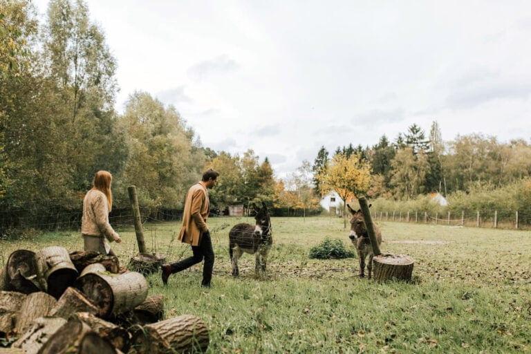 Découverte des environs de la Petite Forêt près de Brussels avec les ânes