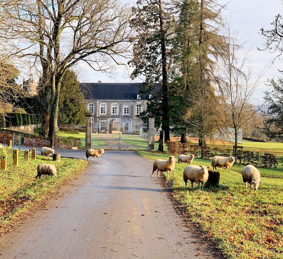 Allée menant au château d'Arville à Namur